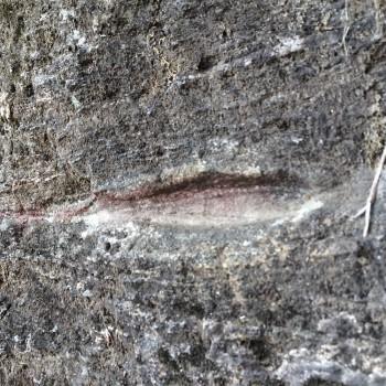 Imprint in rock.