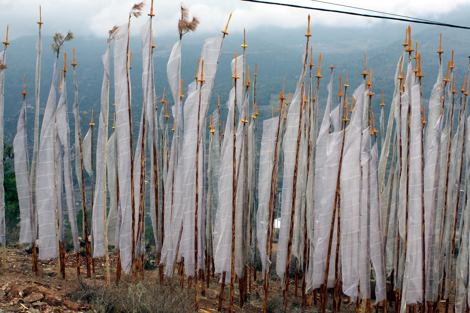 Cluster of white prayer flags at Drak Karpo commemorating the dead. THis is a common site across Bhutan.